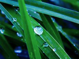 Drops of water by Silvia-Pp