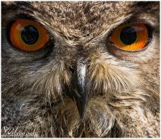 All eyes on you by Salvas