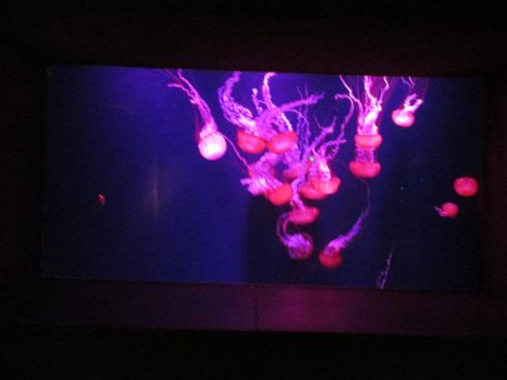 Pink jellyfish at the Lost Chamber of Atlantis. by TawogAdventure
