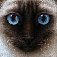Warrior Cats - Siamese Cat by Wynnyelle
