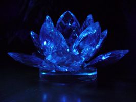 Blacklight Lotus Stock I by Melyssah6-Stock