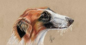 Borzoi by lonely-wolf-22