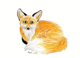 Fox by H3llzAng3l