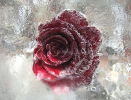 Ice Rose 2 by elissadido