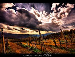 Dramatic Vineyard by Marcello-Paoli