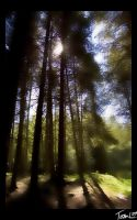 Sunlit Woods by TheAcolyte
