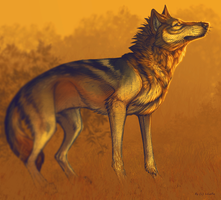 Autumn wolf v2 by LiLaiRa