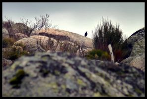 Standing on the rock. by InnerTruth