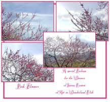 Pink Flowers Pack by Ivette-Stock
