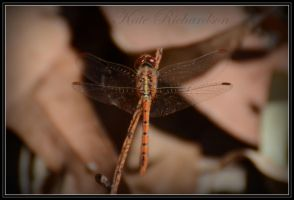 Dragonfly 4 by DesignKReations