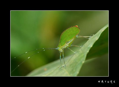 nature itself. by jewelle