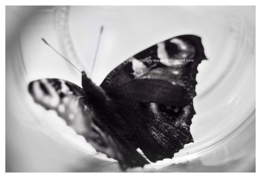 Black and white butterfly by OMG-ImSoAwesome
