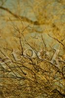 Branches2 by JillAuville