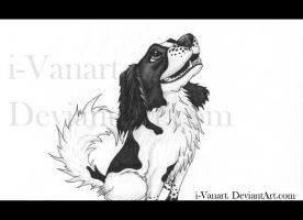 Traditional Drawing: Dog by i-Vanart