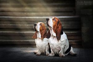 Basset hounds in the light by Ksuksa-Raykova