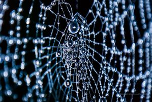 Morning web by ShutterFace