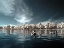 Infrared Duck by hal9k