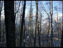 Freeze Forest II by StereoCatastrophe