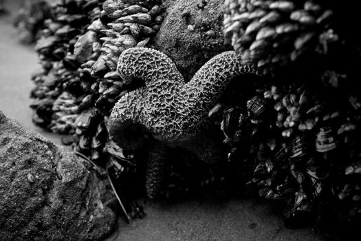 Sea Star by endofthelinefilm