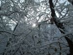 Through the Trees - South Park after 1st Snow 2013 by Myrddin88