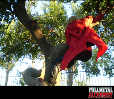 Edward Elric: Tree Climber? by RamblinGinger