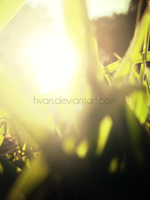 The Grass and the Sun 4 by Hvan