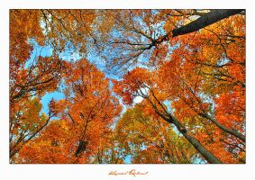 Autumn Colours II by zozzy1980