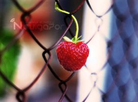 strawberries by NaViGa7or