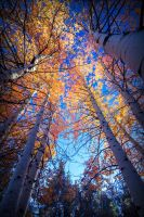 Northern Nevada Color by sellsworth