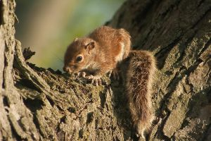 a baby squirrel by suspy