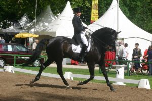 Dressage Trot Stock 04 by LuDa-Stock
