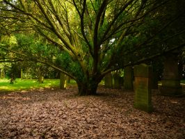 Old Forest Cemetery 2012 20 by Dragoroth-stock
