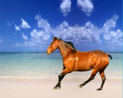 Galloping horse on beach by cammyton