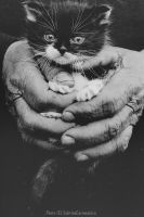 hands with cat by sabbbriCA