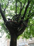bike bearing tree by stolen-identity
