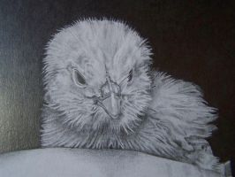 Close up of Chick by artistik-ly-bent