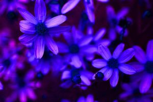 Glow in the Dark Stars by PennyMichelle