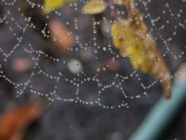 Drops On Web by MegnRox15