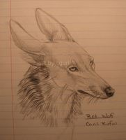 Canis Rufus by InstantCoyote