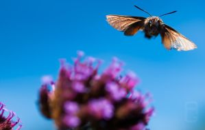 Flying Butterfly And Purple Flowers by agaillard