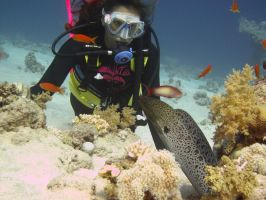 Moray Eel encounter by Cicciobello-BoBo