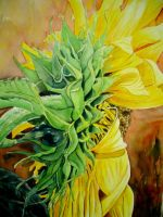 Sunflower by p-e-a-k