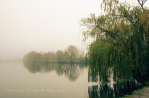 Pussy-willow by saltov-man