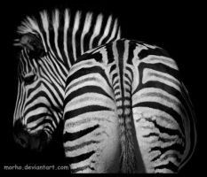 zebra: striped back by morho