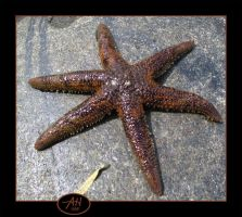 Another Starfish by speedyfearless
