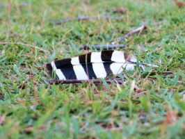 hoopoe feather by elooly