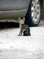the cat from my street by apopov
