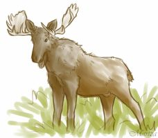 moose by Martza