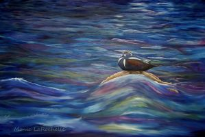 Harlequin duck by HappyMoyeah