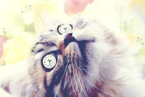 A cat, A fruit and a clock. by HotSpirit